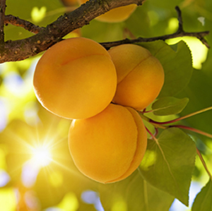 http://nutripak.com/wp-content/uploads/2016/09/square-fruit2.jpg