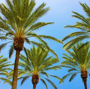Palm Trees fertilizer